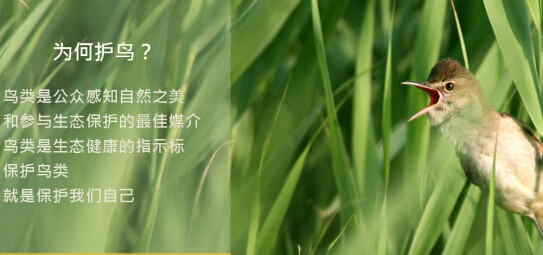 """""""让候鸟飞""""公益基金在京启动"""